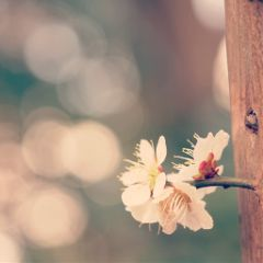 cute flower spring photography nature