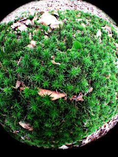 fisheye moss forest green leaf
