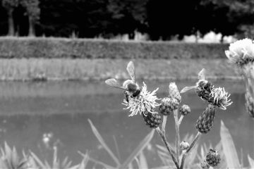 black & white flower photography nature summer
