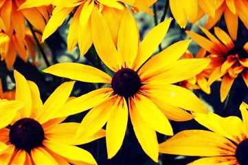 flower nature photography yellow