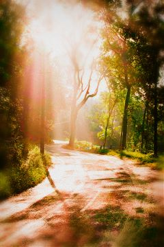 photography nature sunlight kerala road