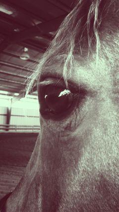 horse western hunters english fun
