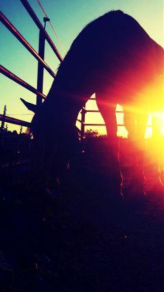 jazz horse pets & animals sunset orange