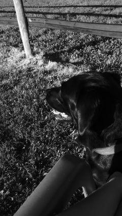 dog pets & animals black & white hdr cute