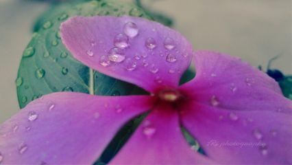 flower photography rain