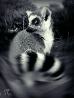 blackandwhite furry petsandanimals cute