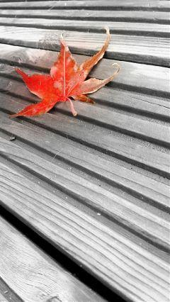 black colorful nature photography autumn