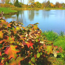fall metroparks park beautiful photography