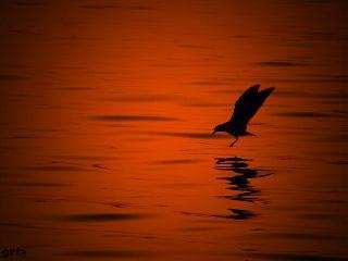 love photography emotions petsandanimals sunset