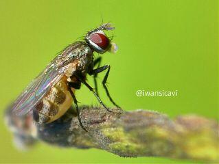 petsandanimals macro nature photography