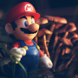 mushrooms toys nature decorating dodgereffect