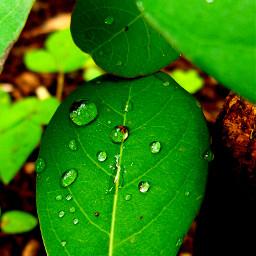 nature rain dews morning photography