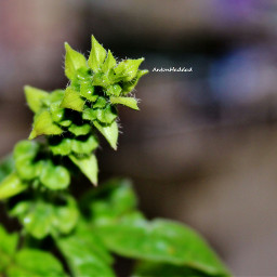 blurrybackground macro blur plan colorful photography