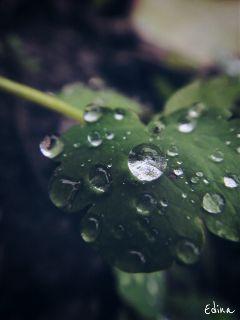 water drop rain nature waterdrop